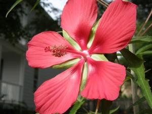Bigassflower3