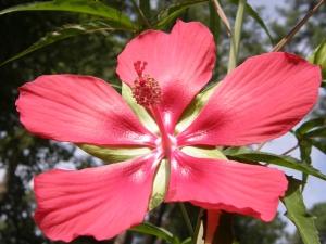 Bigassflower