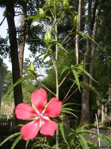 Bigassflower4