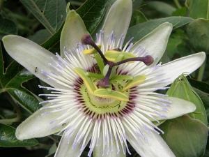 flowerfromouterspacebeehind
