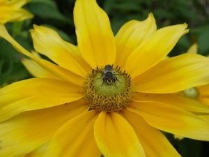 yelloworangewith bug4