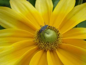 yelloworangewith bug2