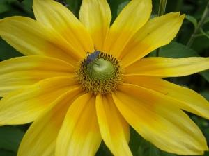 yelloworangewith bug